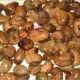 High Quality Raw and dry cashew nuts for sale_export