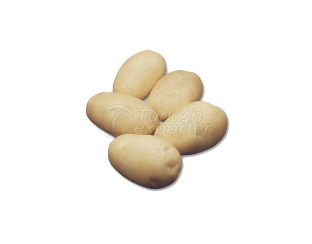Frying Potato VAN GOGH
