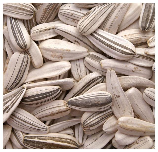 Sunflower Seeds Roasted