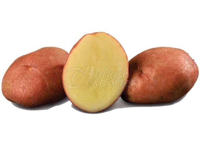 Edible Potato DESIREE