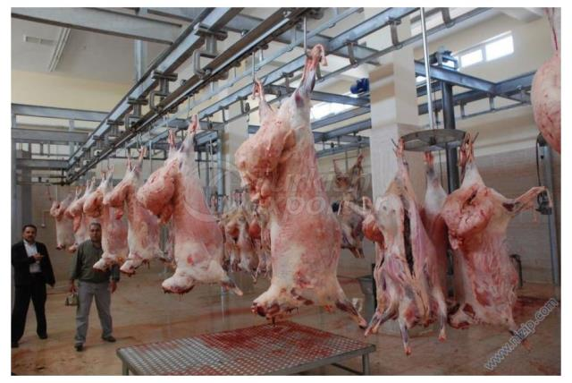 Ovine - Cattle Slaughterhouses