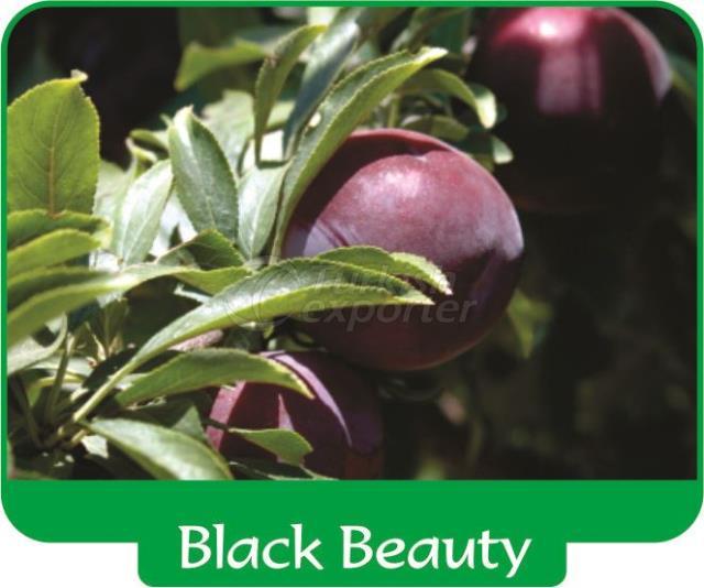 Plum Black Beauty