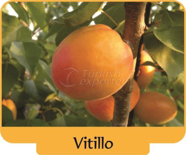Apricot Vitillo