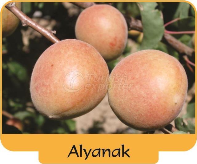 Apricot Alyanak