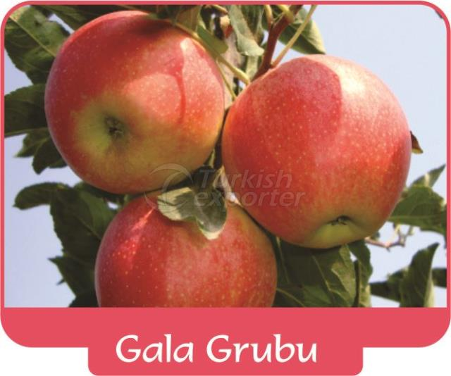 Apple Gala Grubu