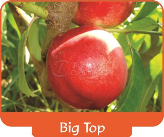 Nectarine Big Top