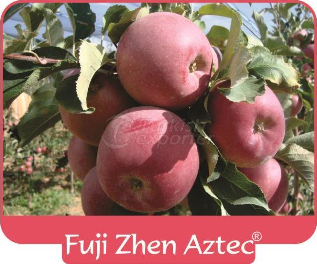 Apple Fuji Zhen Astec
