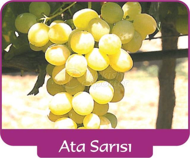 Grape Ata Sarısı