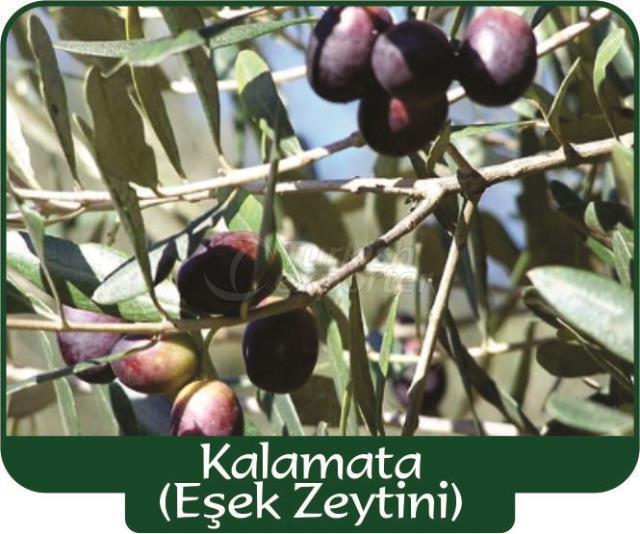 Olive Kalamata
