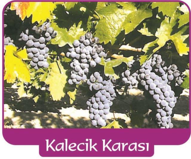 Grape Kalecik Karası