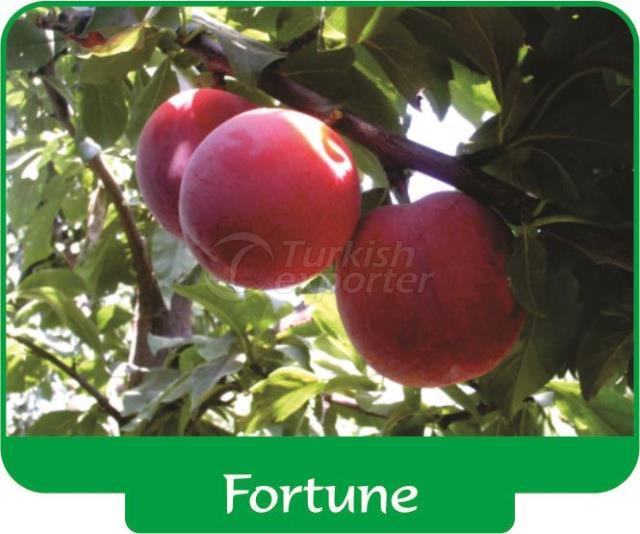 Plum Fortune