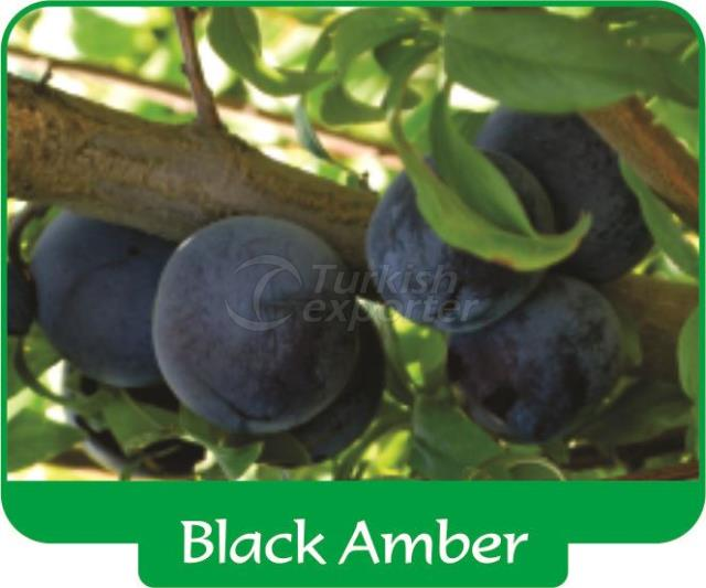 Plum Black Amber