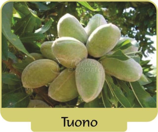 Almond Tuono