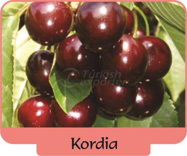 Cherry Kordia