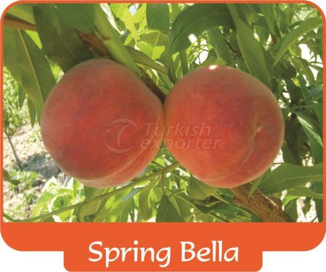 Peach Spring Bella