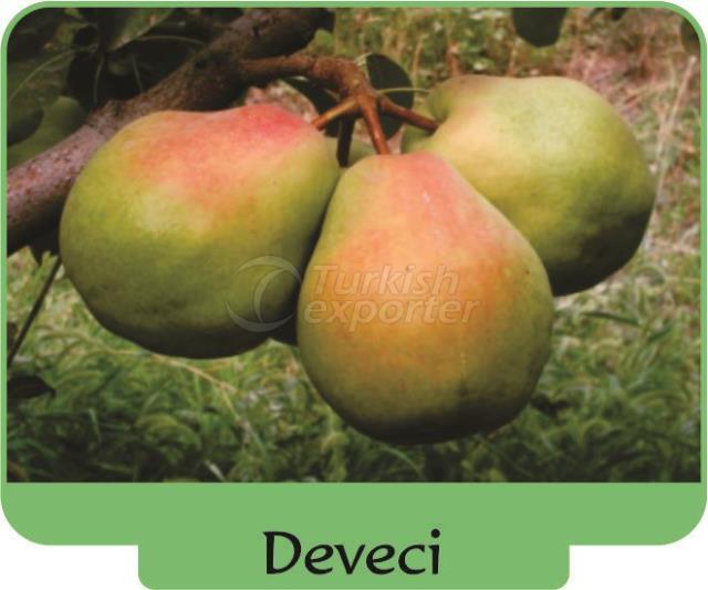 Pear Deveci