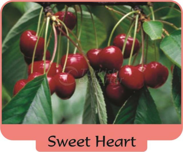Cherry Sweet Heart