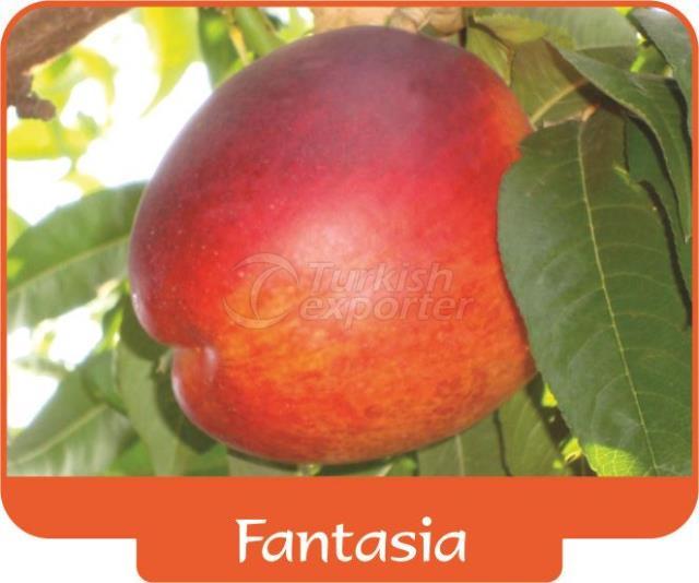 Nectarine Fantasia