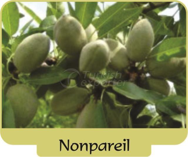 Almond Nonpareil