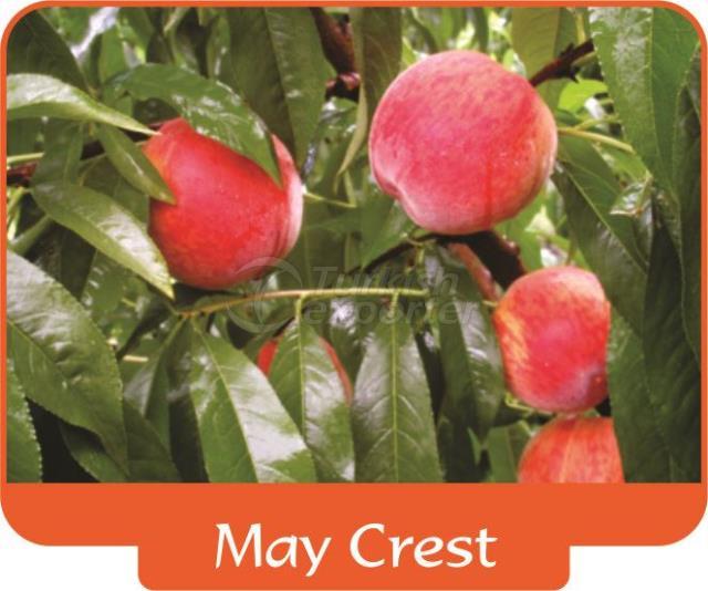 Peach May Crest