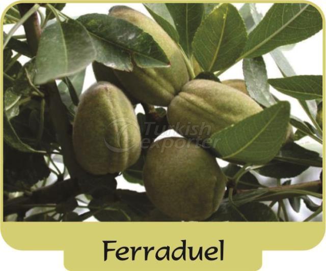 Almond Ferraduel