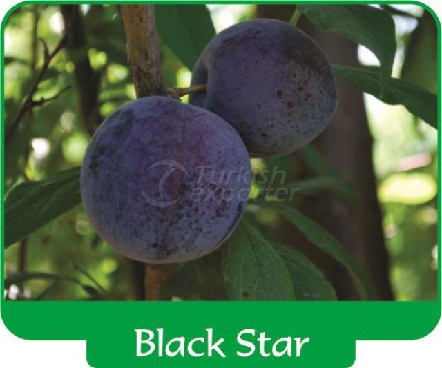 Plum Black Star
