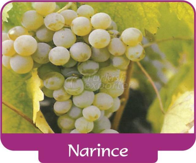 Grape Narince