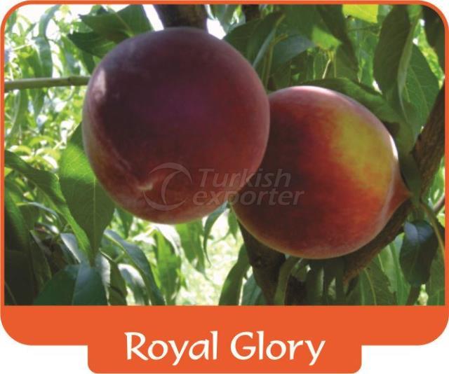 Peach Royal Glory