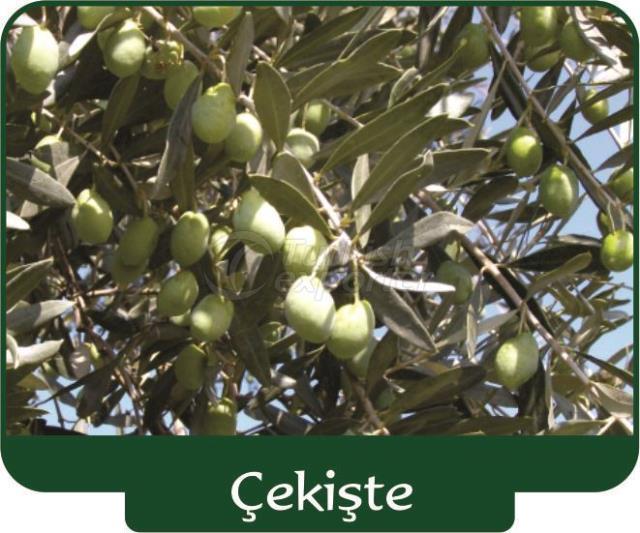 Olive Çekişte