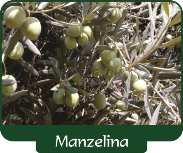 Olive Manzelina