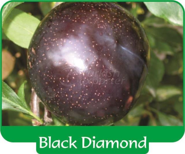 Plum Black Diamond
