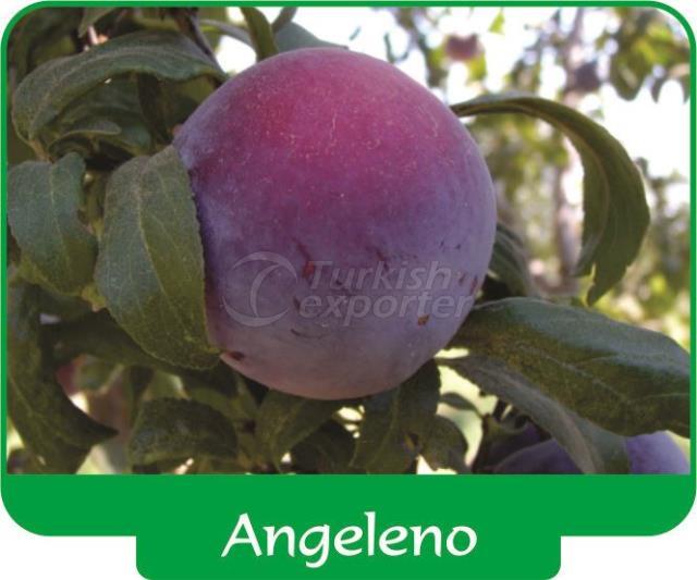 Plum Angeleno