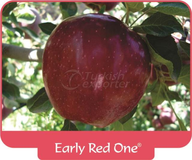 Apple Early Red One