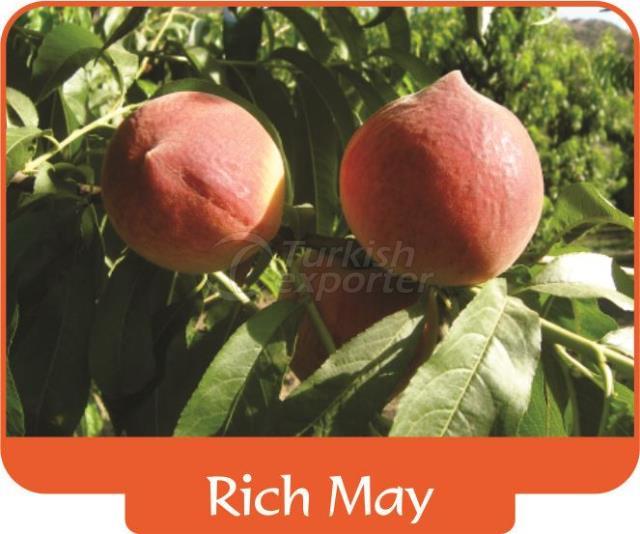 Peach Rich May