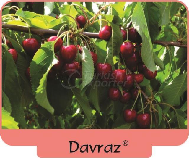 Cherry Davraz