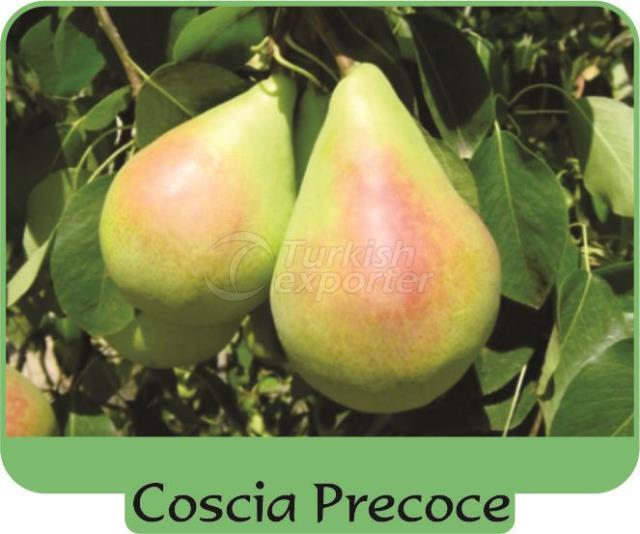 Pear Coscia Precoce