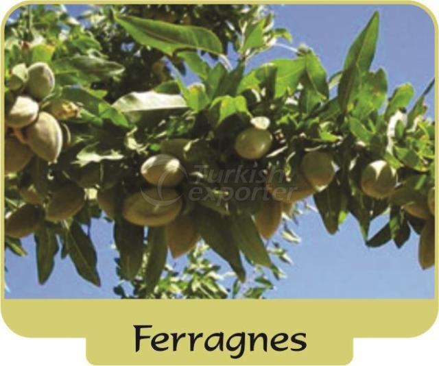 Almond Ferragnes