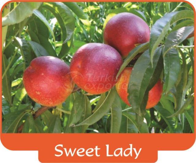 Nectarine Sweet Lady