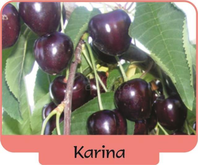 Cherry Karina
