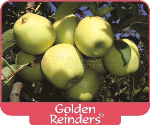 Apple Golden Reinders