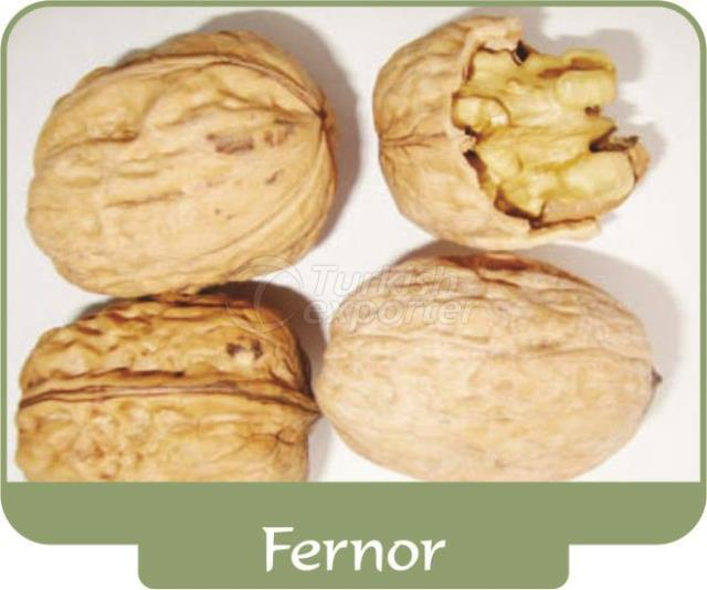 Walnut Fernor