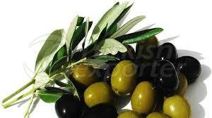 Olive Leaves Concentrate