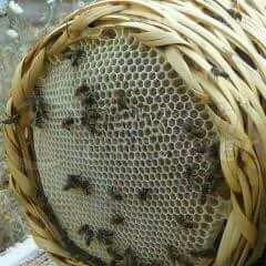 Natural Honeycomb In Wicker Basket