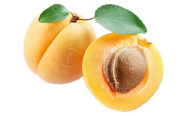 Apricot Bebeco