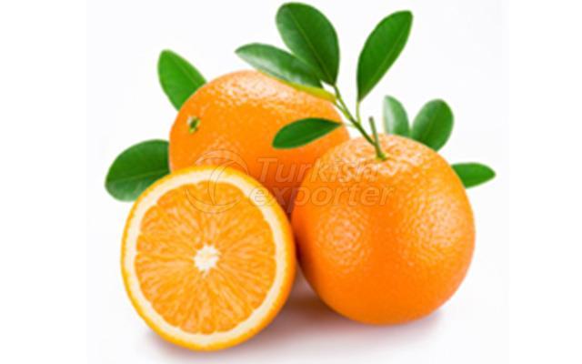 Orange Washington Navel