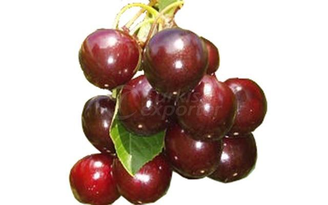 Cherry Attika Kordia