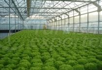 Greenhouse - Farming Applications