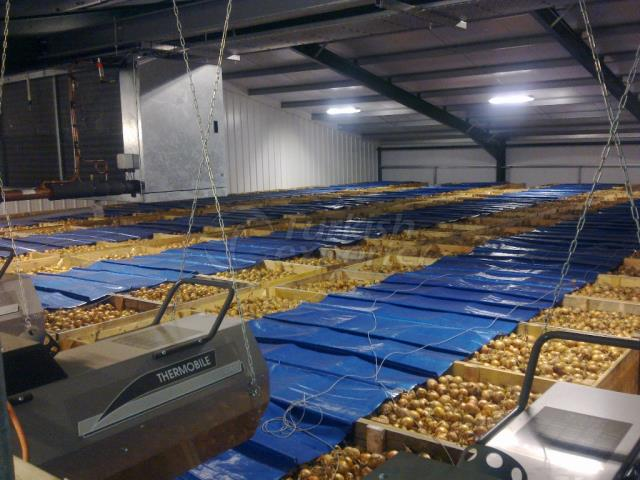 Potato Depot