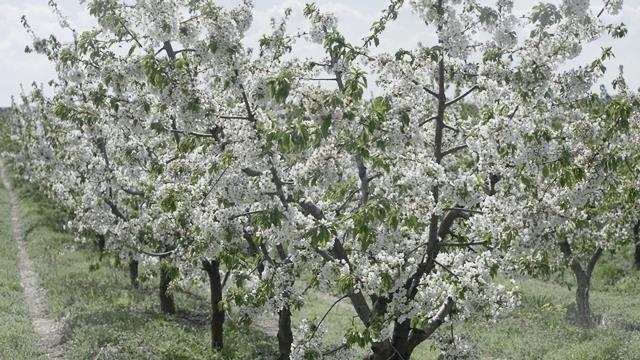 Rosio Agriculture