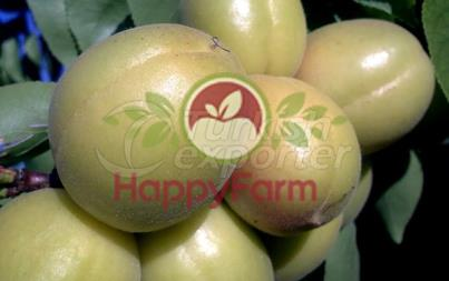 Apricot Sekerpare
